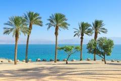 死海风景有棕榈树的在阳光海岸 免版税库存图片
