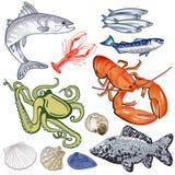海鱼例证 免版税库存图片