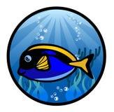 海鱼动画片例证 图库摄影