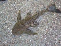 海鱼在水中 美丽的鱼海运 图库摄影