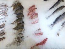 海鱼毁坏了在冰的谎言 免版税库存图片
