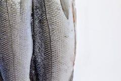 海鱼特写镜头在白色背景的 免版税库存照片