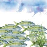 海鱼 背景查出的白色 免版税库存照片