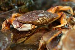 海鲜市场活太平洋大蟹 库存图片