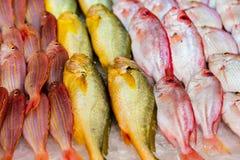 海鲜市场 库存照片