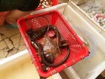 海鲜市场 免版税库存图片