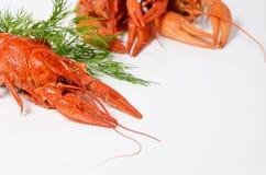海鲜盘,红色煮沸了小龙虾 种类啤酒的快餐 库存照片