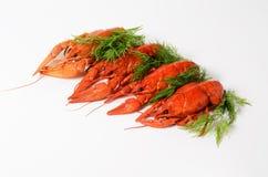 海鲜盘,红色煮沸了小龙虾 种类啤酒的快餐 图库摄影