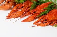海鲜盘,红色煮沸了小龙虾 种类啤酒的快餐 免版税库存图片
