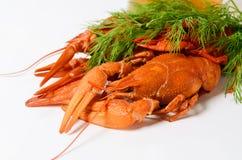 海鲜盘,红色煮沸了小龙虾 种类啤酒的快餐 库存图片