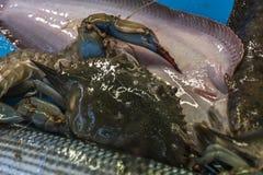 海鲜细节在市场上 免版税库存图片