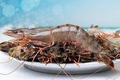 海鲜背景 新鲜的未加工的大大虾老虎或虾特写镜头在一块板材在被弄脏的抽象热带海滩前面与 免版税库存图片