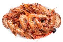 海鲜背景 新鲜的烤大大虾老虎或虾特写镜头在白色背景隔绝的一块五颜六色的海鲜板材 库存图片
