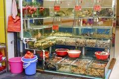 海鲜餐馆鱼缸在沿海城市 库存图片