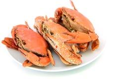 海鲜,在牌照的煮熟的螃蟹 免版税库存照片
