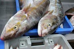 海鲜 免版税库存照片