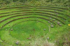 海鳗废墟在库斯科,秘鲁 图库摄影