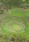 海鳗废墟在库斯科,秘鲁 免版税库存图片