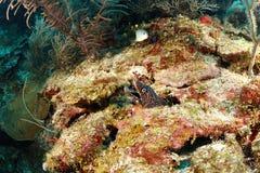 海鳗盆的鳗鱼 库存照片