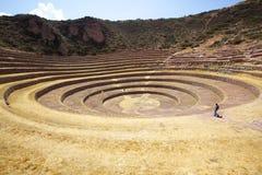 海鳗, Cusco,秘鲁 免版税库存照片