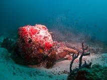 海鳗 库存图片