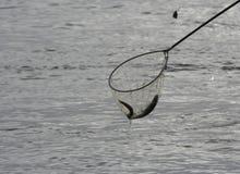 海鳗 免版税库存照片