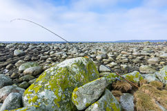 海鳟捕鱼区域 免版税图库摄影