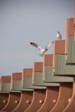 海鸟漫步在屋顶的两只逗人喜爱的海鸥 图库摄影