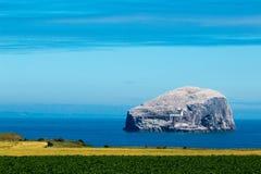 海鸟英国欧洲的低音岩石海岛 免版税库存照片