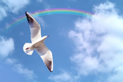 海鸟释放 免版税库存照片