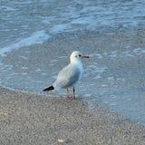 海鸟 免版税图库摄影