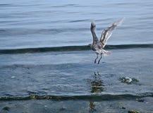 海鸟 图库摄影