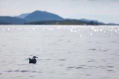 海鸥先生 库存照片