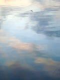 海鸥反射,酒吧,黑山 库存照片