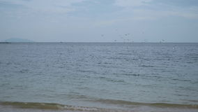海鸥和一艘船在地平线,鸟飞行 影视素材
