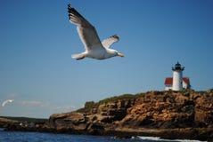 海鸥和新英格兰灯塔 免版税库存照片