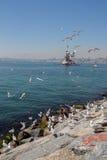 海鸥和未婚塔在伊斯坦布尔 免版税库存图片