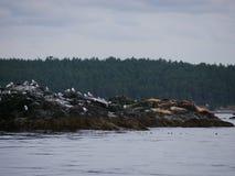 海鸥和海狮 免版税库存图片