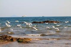 海鸥和海 库存图片