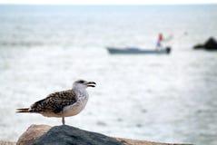 海鸥和渔夫 免版税库存图片