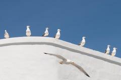 海鸥和白色墙壁 免版税库存图片