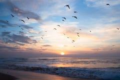 海鸥和美好的日落群在海 免版税库存图片