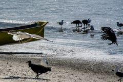 海鸥和雕与开放翼在海滩 免版税库存照片