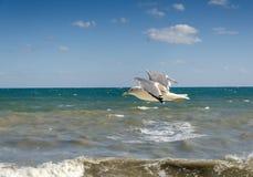 海鸥和风雨如磐的海 免版税库存图片
