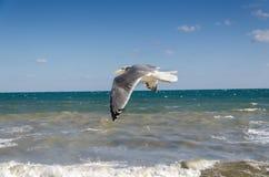 海鸥和风雨如磐的海 免版税库存照片