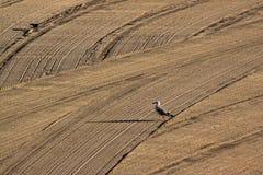 海鸥和黑色鸠由在Medit的拖拉机沙子清洗了 免版税库存照片
