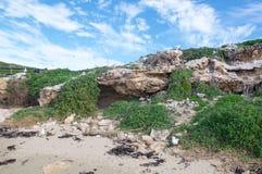 海鸥和洞:企鹅海岛 免版税图库摄影