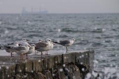 海鸥在一个石码头边缘坐一风暴日 免版税库存图片