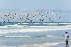 海鸥在人海鲫科上飞行在和平的城市 免版税库存图片