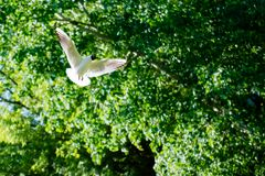 海鸥在公园 库存图片